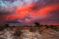 Fiery sky with rainbow streaks at sunset over Kalahari landscape.