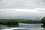 the mangroves of black turtle cove Galapagos, with in the distance the smoke of the garbage belt of Santa Cruz