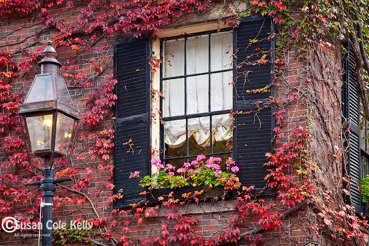 Ivy wall in autumn, Beacon Hill, Boston, MA