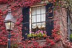 Ivy wall in autumn, Beacon Hill, Boston, MA