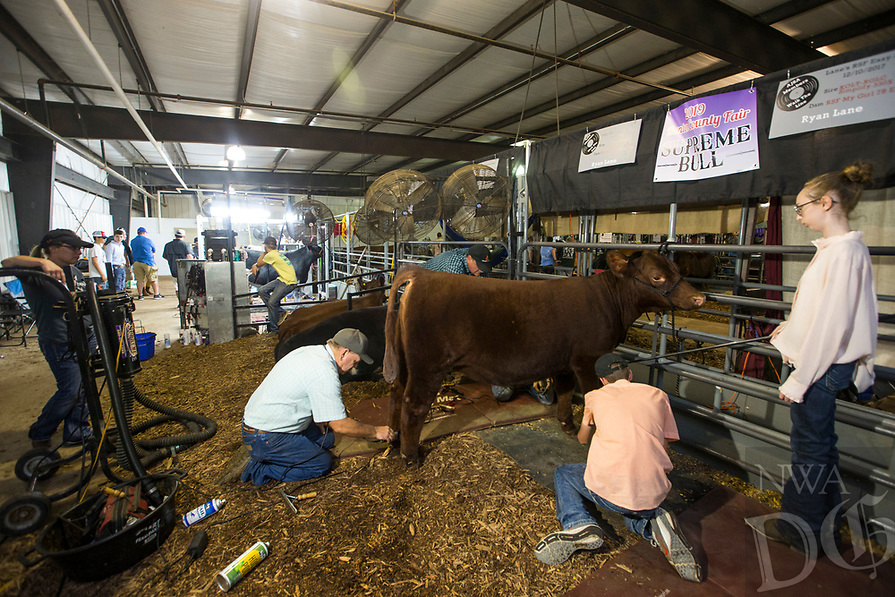 NWA Democrat-Gazette/BEN GOFF @NWABENGOFF<br /> Competitors groom their heifers as they prepare for the beef showmanship finals Thursday, Aug. 8, 2019, during the Benton County Fair in Bentonville.