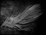 A small single feather