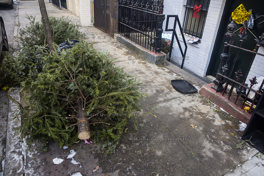 USA New York Alberi di Natale abbandonati dopo le feste Abandoned Christmas trees after holidays
