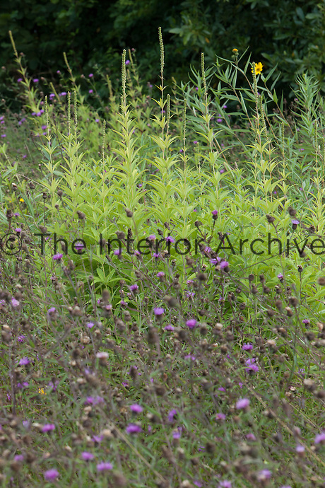 Wildflower meadow at Great Dixter