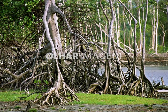 Vegetação de mangue na ilha de Marajó. Pará. Foto de João Caldas.