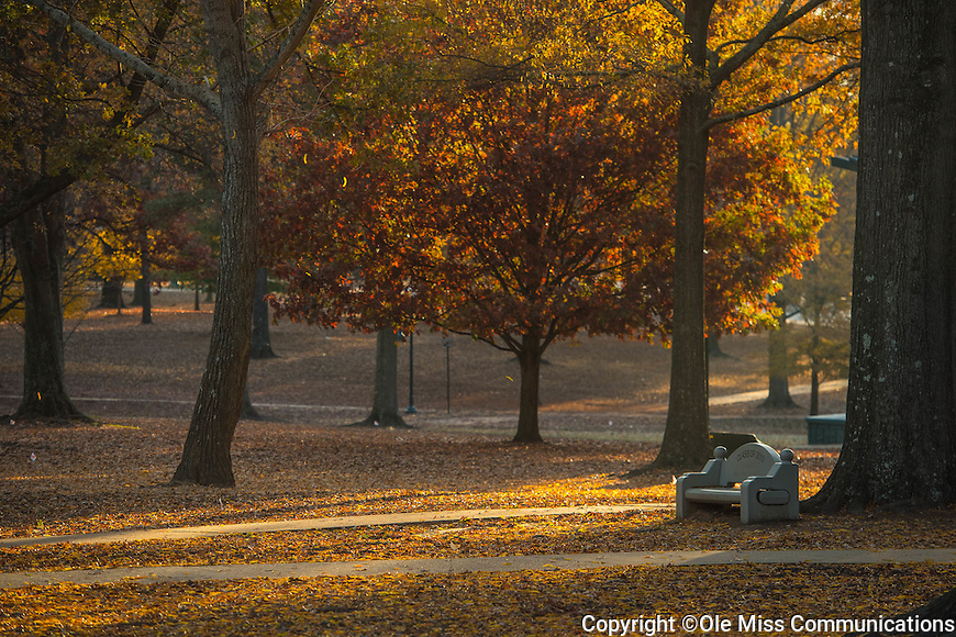 Morning light through a chilly grove.  Photo by Kevin Bain/Ole Miss Communications