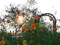 July sunrise in the Piermont Community Garden