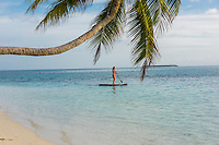 Maldives, Rangali Island. Conrad Hilton Resort. Woman on paddleboard on the ocean, under a palm tree. (MR)