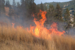 Prescribed burn in Conner Unit 5 at Sinlahekin Wildlife Area.  Fire is consuming sweet clover.