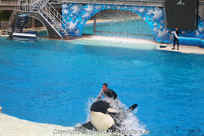 ORCA AND TRAINER AT SHOW