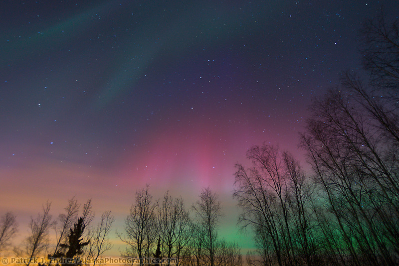 Colorful aurora borealis display over the boreal forest in Fairbanks, Alaska, November 2004.