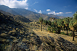 Indian Canyons Andreas Canyon Section Palm Springs California USA