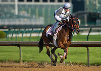 Beholder, trained by Richard Mandella, during morning workouts for the Kentucky Derby at Churchill Oaks in Louisville, Kentucky on April 30, 2013.