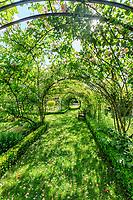 France, Indre-et-Loire (37), Montlouis-sur-Loire, jardins du château de la Bourdaisière, dans le potager, tonnel de rosiers grimpants et banc