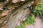 Andean Mountain Cat (Leopardus jacobita) latrine, Abra Granada, Andes, northwestern Argentina
