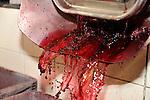 20081001 - France - Bourgogne - Dijon<br /> A LA FABRIQUE DE CASSIS BRIOTTET, 12 RUE BERLIER A DIJON.<br /> Ref : CASSIS_BRIOTTET_005.jpg - © Philippe Noisette.