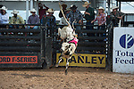 Davis Rodeo 4X1 of Davis Rodeo Ranch/ Fogle during the American Bucking Bull, Incorporated event in Decatur, TX - 6.3.2016. Photo by Christopher Thompson