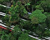 Cruce de lineas sobre bosques y morichal..