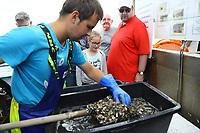 Schaufischfang wird auf dem Krabbenkutter demonstriert und das Meeresleben erklärt - 16.08.2018: Fischfang und Rundfahrt von Neuharlingersiel
