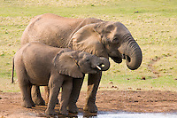 Addo Elephant National Park, Eastern Cape, South Africa. Photo: Joli