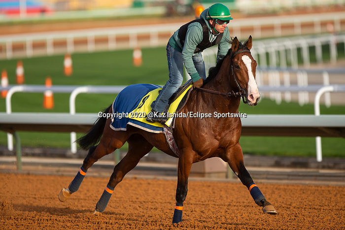 RIYADH,SAUDI ARABIA-FEB 27: Royal Youmzain excercises for Neom Turf Cup at King Abdulaziz Racetrack on February 28,2020 in Riyadh,Saudi Arabia. Kaz Ishida/Eclipse Sportswire/CSM