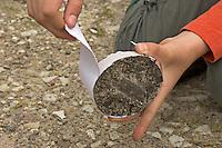 Kinder gießen Tierspur aus Gips, Mädchen entfernt Karton vom Gips mit dem Trittsiegel, der Fußspur von einem Reh