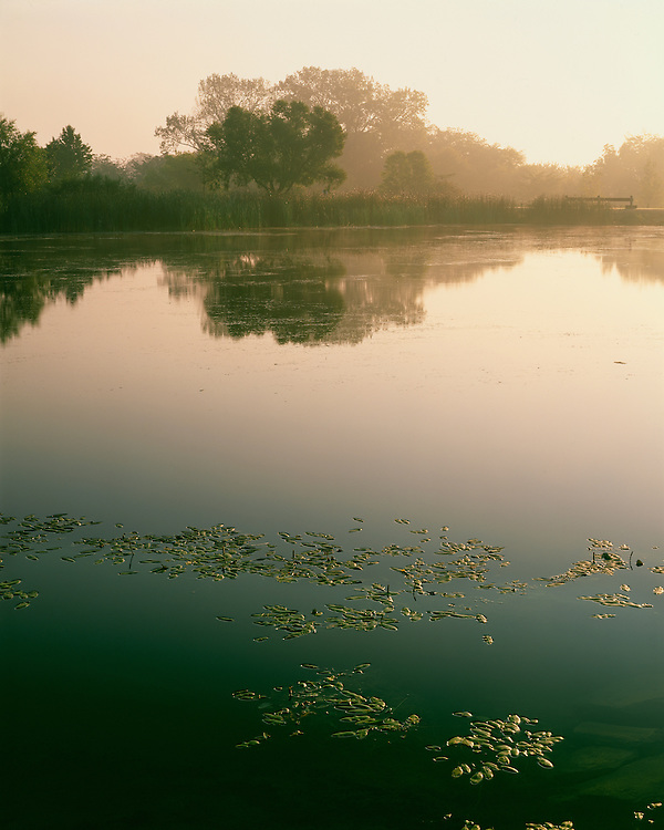 Foggy sunrise light on Emerald Pond; Middle Fork River County Forest Preserve; Champaign County, IL