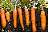 Vegetable Root-like Crops