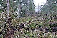 Fallen trees and branches from December 2006 windstorms, completely block a section of Westside Road, Mount Rainier National Park.