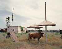A cow stands in the shade in the grounds of a disused sanitorium in Bilgah on the Absheron Peninsula.