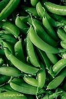 HS26-120d  Pea - edible sugar pea pods - Sugar Ann variety