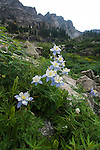 wildflowers, Colorado blue columbine, Aquilegia coerulea, subalpine, mountain, peak, landscape, East Inlet, summer, July, afternoon, Rocky Mountain National Park, Colorado, Rocky Mountains, USA