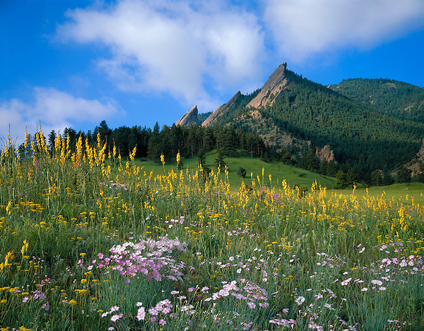 Flatirons rock formation and wildflowers in Chautauqua Park, Boulder, Colorado. .  John leads private photo tours in Boulder and throughout Colorado. Year-round Colorado photo tours.