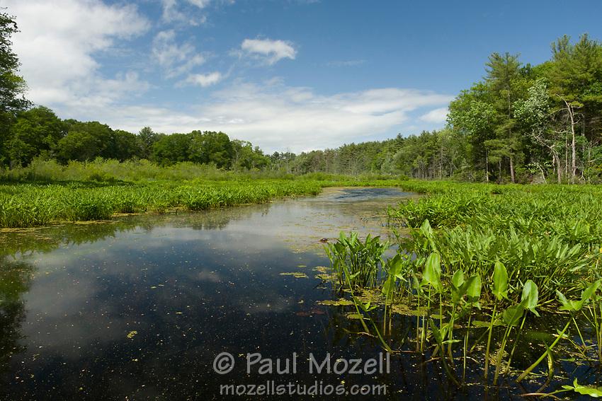 The ipswich river flows freely through Topsfield, Massachusetts