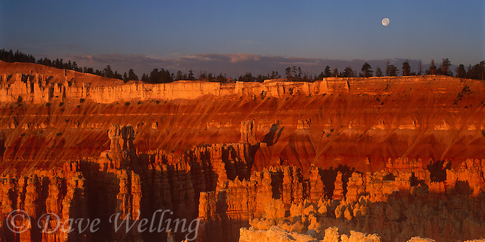 904000009 panoranic view of a full moon rising above the silent city with the hoodoos turned reddish gold in the setting sun viewed from sunset point in bryce canyon national pari utah