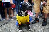 Un perro con la camiseta de Colombia antes del partido de eliminatorias para el Mundial de F&uacute;tbol 2018 contra Argentina en el Estadio Metropolitano Roberto Melendez de Barranquilla el 17 de novimbre de 2015.<br /> <br /> Foto: Archivolatino<br /> <br /> COPYRIGHT: Archivolatino<br /> Prohibido su uso sin autorizaci&oacute;n.