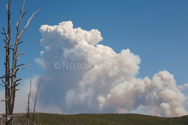 smoke building up as a wildfire begins to spread in a western montana forest