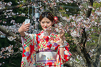 Japan, Kyoto. Girl in kimono photographing herself with cherry blossoms.