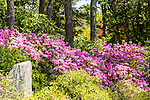 Asticou Azalea Garden in Northeast Harbor, Maine, USA