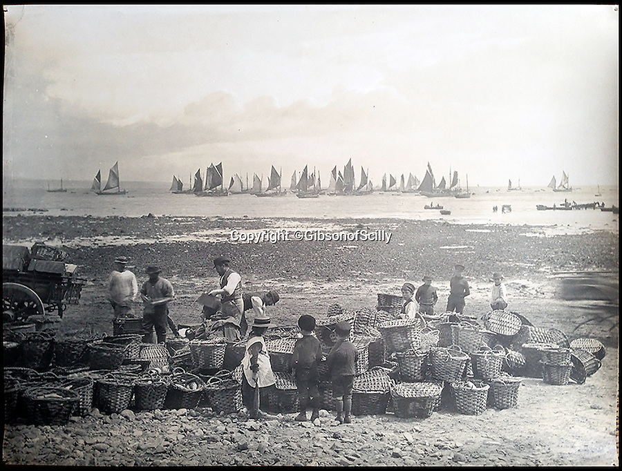 BNPS.co.uk (01202 558833)<br /> Pic: GibsonOfScilly/BNPS<br /> <br /> Mounts Bay fishing fleet.<br /> <br /> An archive of eye-opening photographs documenting the grim reality of Poldark's Cornwall has emerged for sale for £25,000.<br /> <br /> More than 1,500 black and white images show the gritty lives lived by poverty-stricken families in late 19th and early 20th century Cornwall - around the same time that Winston Graham's famous Poldark novels were set.<br /> <br /> The collection reveals the lowly beginnings of towns like Rock, Fowey, Newquay and St Ives long before they became picture-postcard tourist hotspots.<br /> <br /> Images show young filth-covered children playing barefoot in squalid streets, impoverished families standing around outside the local tax office, and weather-beaten fishwives tending to the day's catch.<br /> <br /> The Cornish archive, comprising 1,200 original photographic prints and 300 glass negative plates, is tipped to fetch £25,000 when it goes under the hammer as one lot at Penzance Auction House.