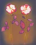Lumen Print of Roses