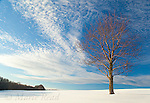 Solitary tree in a snow-covered field, with dramatic cloud formations, winter, New York, USA