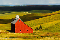 Solitary red barn and expansive fields of wheat, Palouse region of eastern Washington.