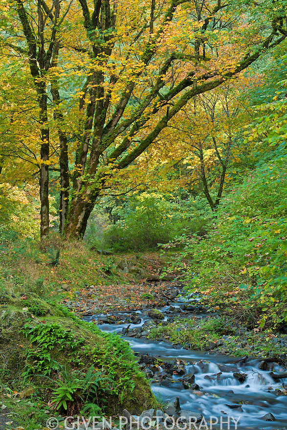 Wakeena Creek in autumn, Columbia Gorge, Oregon, intimate landscape, interiod design photograph, healthcare interior design, medical stock photograph, nature, autumn,