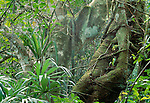 Rainforest landscape, Rio Bravo Conservation Area, Belize
