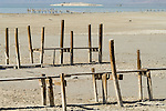 Abandoned wooden fishing piers at the mouth of the Alamo River, Salton Sea, Calif.