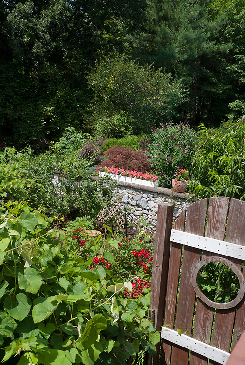 Wooden garden gate with moon circular hole window into pretty garden with Buddleja butterfly bush, shrubs,