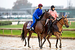 November 1, 2018: Stillwater Cove, trained by Wesley A. Ward, exercises in preparation for the Breeders' Cup Juvenile Turf Sprint at Churchill Downs on November 1, 2018 in Louisville, Kentucky. Alex Evers/Eclipse Sportswire/CSM