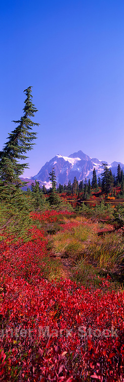 Mount Baker - Snoqualmie National Forest, Washington, USA - Mt Shuksan above 'Heather Meadows' - Alpine Meadow in Autumn, Fall - Panoramic View