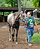 Unbridled Humor before The Forever Together Stakes at Delaware Park on 9/1/12